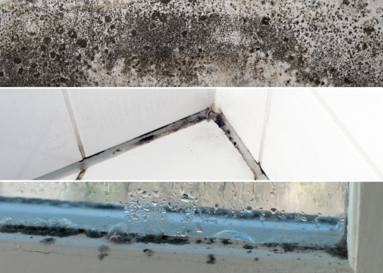 Mould in homes – a Uswitch report